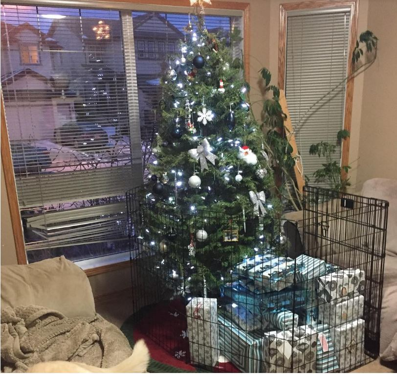 16-how-these-people-saved-christmas-trees-is-brilliant