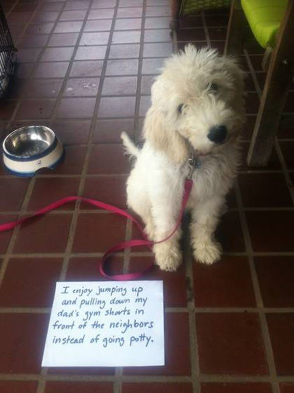20-guilty-pets-ready-to-walk-on-hall-of-shame