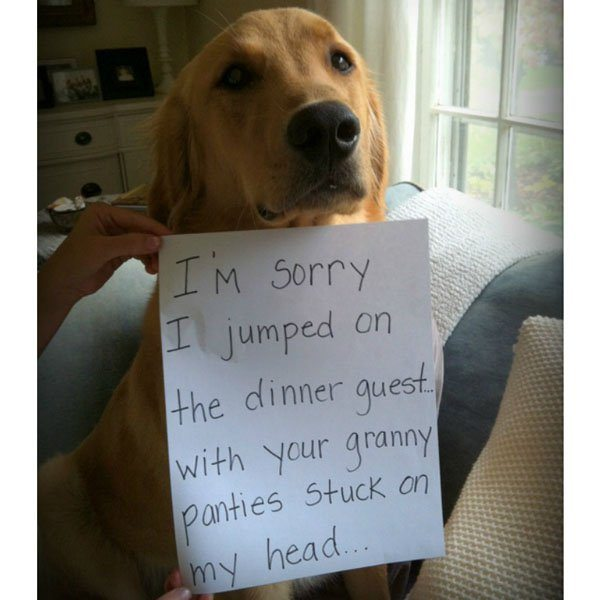 23-guilty-pets-ready-to-walk-on-hall-of-shame