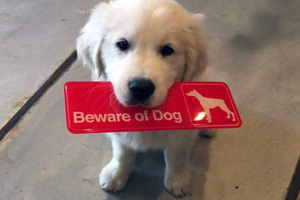 8-why-are-these-beware-of-dog-signs-even-here
