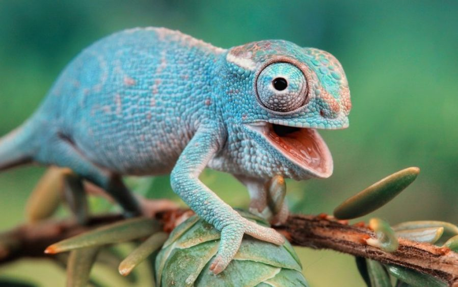 9-crazy-animal-facts-you-could-never-guess