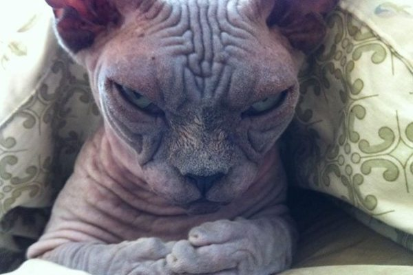 1-check-out-the-angriest-animals-on-the-internet