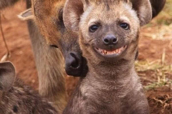 animals'-smile-10