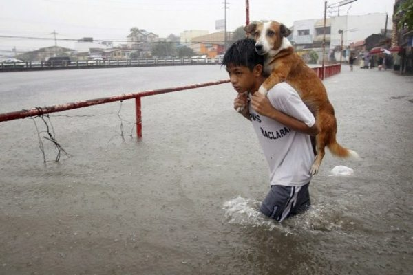 heroes-saving-animals-2