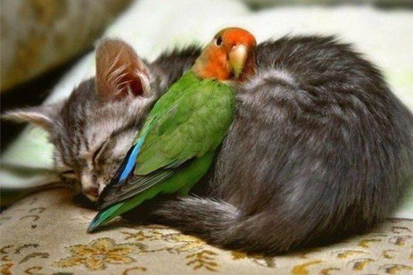 1-hilarious-animals-cute-funny-species