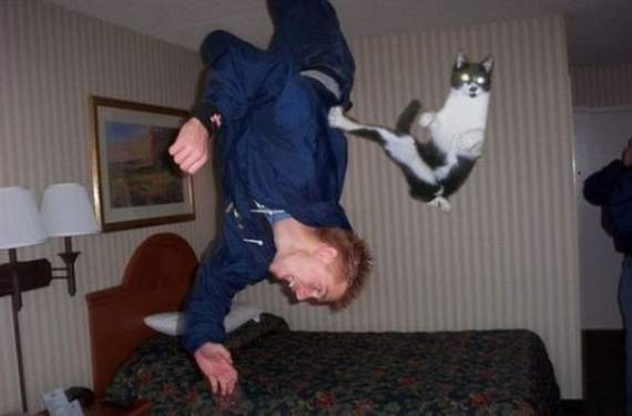 14-most-perfectly-timed-photos-animals-internet-hilarious