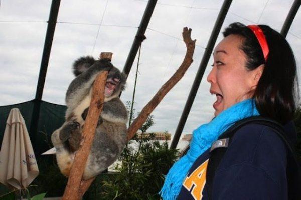 15-funny-animal-photos-taken-better-hilarious