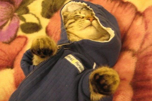 5-heart-warming-kittens-wearing-cardigans