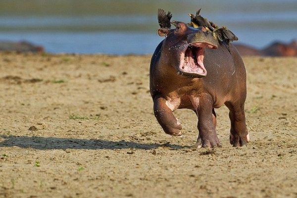 funny-animals-3