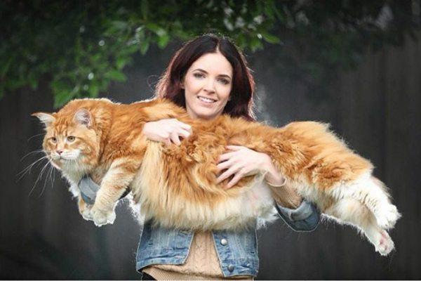 longest-cat-10