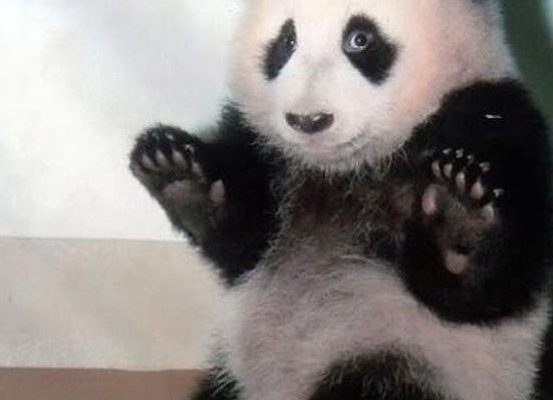 1-times-pandas-were-way-too-cute-to-handle