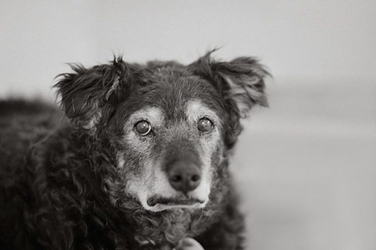 2-rare-look-at-the-lives-of-elderly-dogs