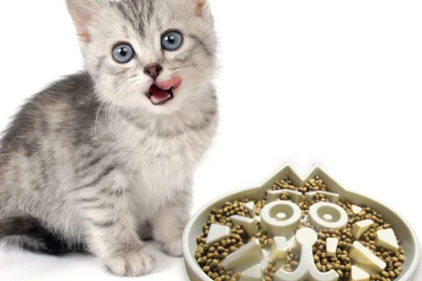 cat-eating