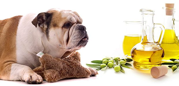 dog-and-olive-oil