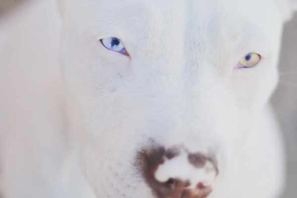 cute-dog's-eyes-2