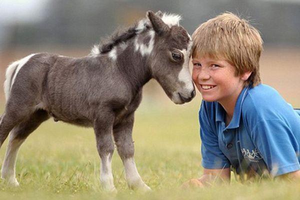 cute-horses-9