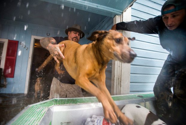 Shane Montie, left, helps one of his dogs board an airboat driven by volunteers Erik Davis, right, and JV Bagley, not pictured, of Carthage, Texas as they evacuate rising waters from Tropical Storm Harvey on Wednesday, Aug. 30, 2017, in Lumberton, Texas. (Ashley Landis/The Dallas Morning News via AP)