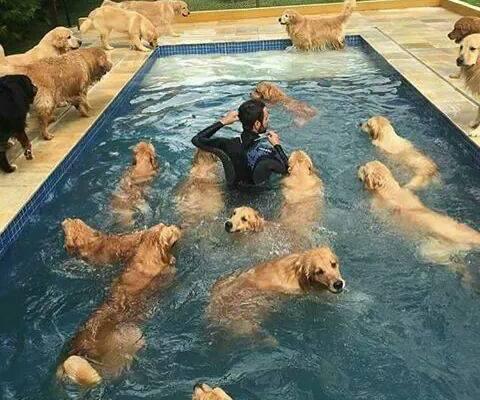 9-pics-make-you-love-dogs-even-more