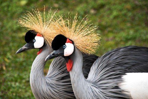 beautiful-birds-5