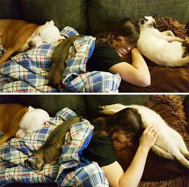 living-with-pets-10