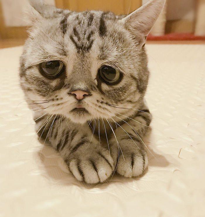 saddest-cat-5
