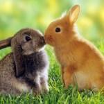Conejos besándose