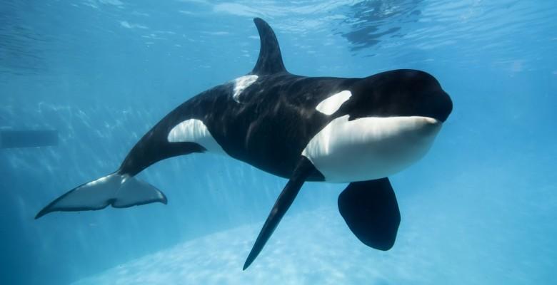 La Orca