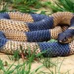 Serpientes ofidios