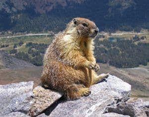 festival del dia de la marmota