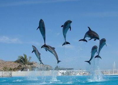 razas de delfines