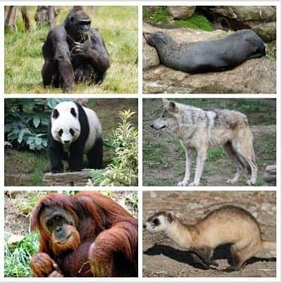 cuantos animales en peligro de extincion hay en el mundo