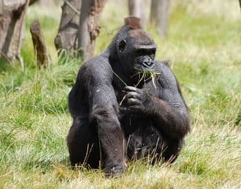animales mamiferos en peligro de extincion