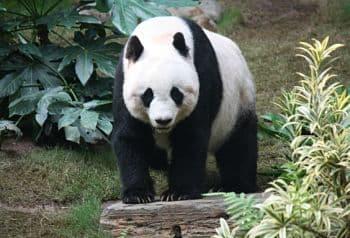 animales en peligro de extincion y sus causas