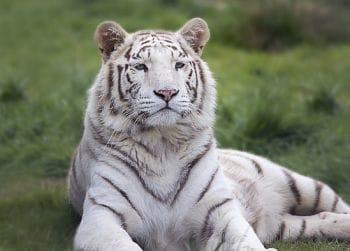 que animales en peligro de extincion hay
