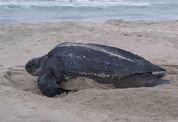 animales marinos en peligro de extincion