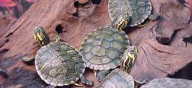 5 consejos para cuidar una tortuga