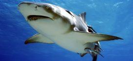 8 cosas increíbles que no sabes del tiburón