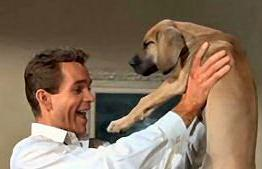 Los Perros De Mi Mujer Animales De Cine