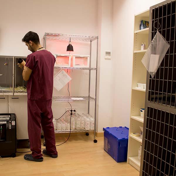 Imagen de Javier en la zona de hospitalización de animales herbívoros