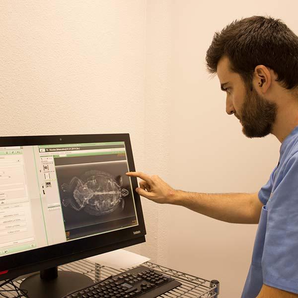 Rayos X de la clínica veterinaria Animales Exóticos 24h