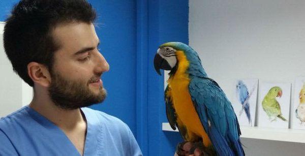 Veterinario Animales Exóticos 24h