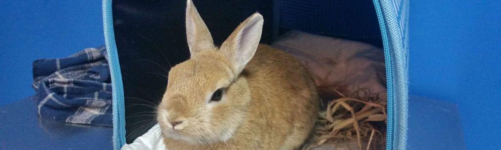 Imagen conejo en transportin