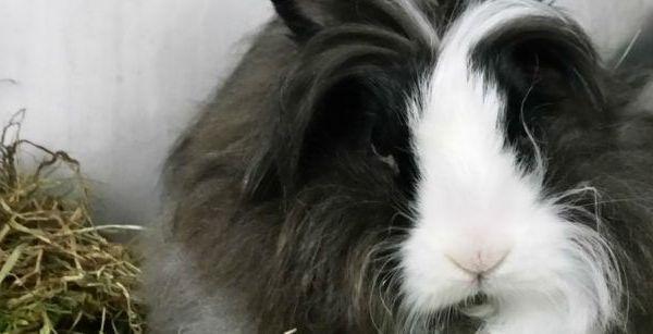 Imagen conejo con comida para conejos