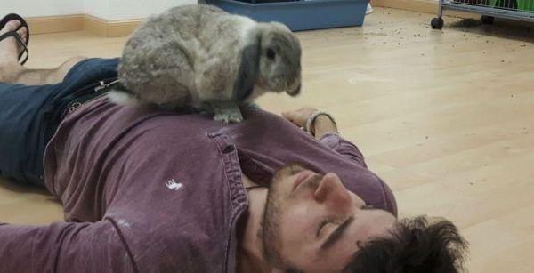 Imagen post cuidar conejo en casa