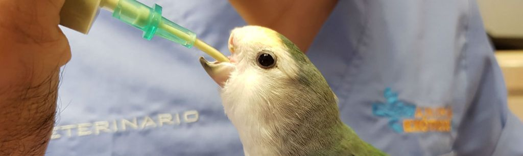Imagen cómo cuidar a los pájaros