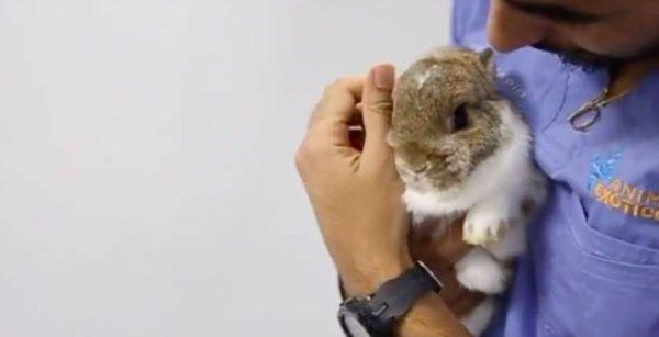 Imagen adopción conejos