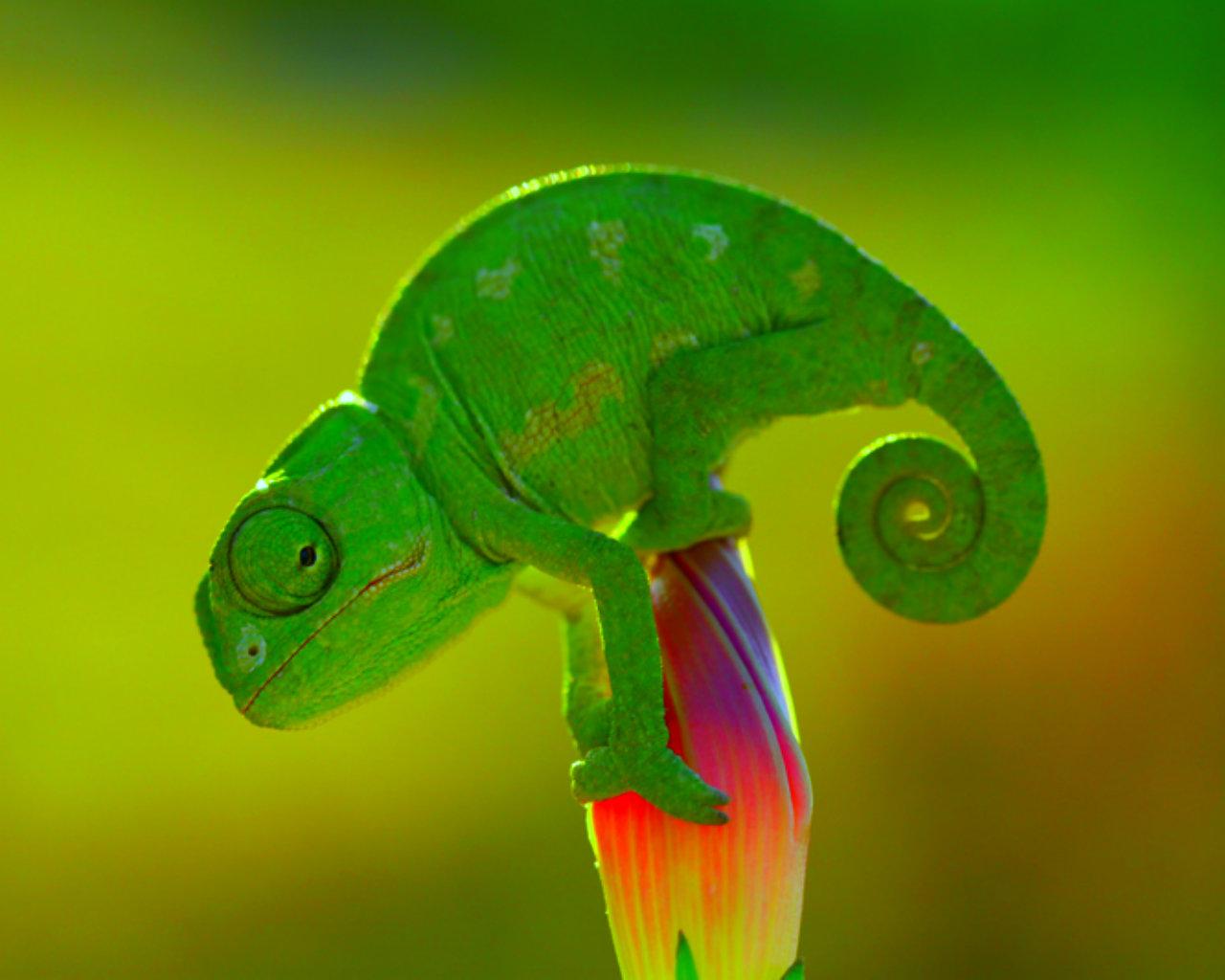 Cute Baby Lizards Wallpaper Animales Ex 243 Ticos Kids El Mundo De Los Animales Ex 243 Ticos