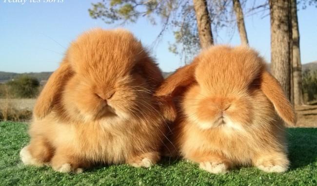 41 imgenes de tiernos y dulces conejos y liebres Tarjetas de Pascua  Animales Hoy