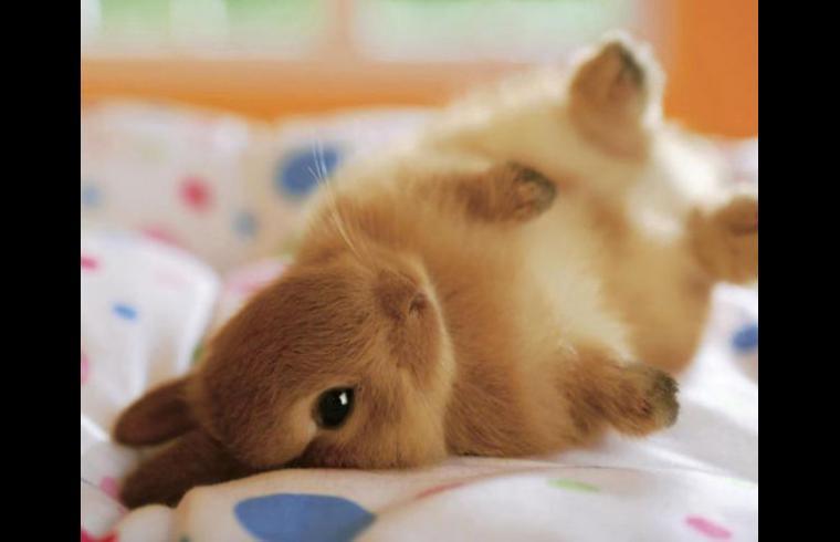 41 imgenes de tiernos y dulces conejos y liebres Tarjetas de Pascua