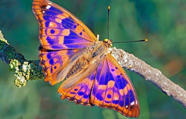 30 mariposas coloridas Imgenes para compartir por